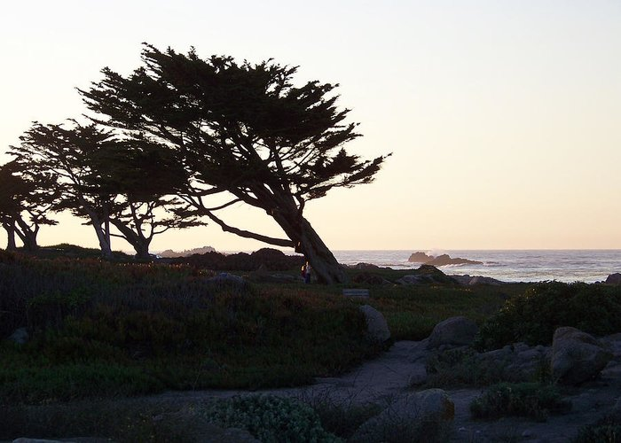 Seascape Greeting Card featuring the photograph Cypress Silhouette by Maggie Cruser