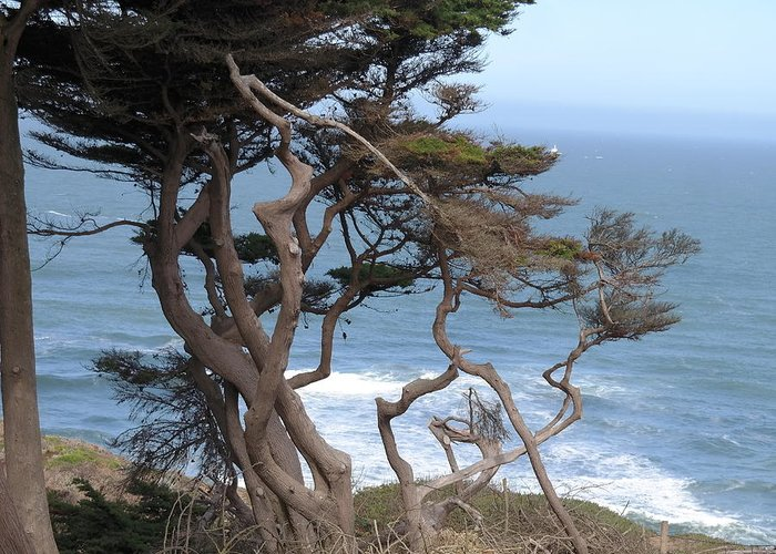 Landscape Greeting Card featuring the photograph Cypress On The Cliff 15 by Pusita Gibbs