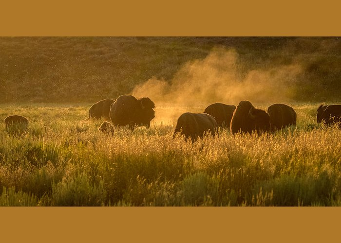 Bull Greeting Card featuring the photograph Daddy Bull And The Rut by Yeates Photography