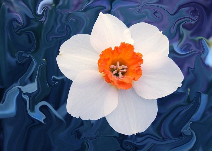 Flower Greeting Card featuring the photograph Daffodill In Blue by Jim Darnall
