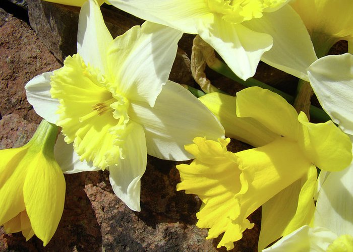 �daffodils Artwork� Greeting Card featuring the photograph Daffodils Flower Bouquet Rustic Rock Art Daffodil Flowers Artwork Spring Floral Art by Baslee Troutman