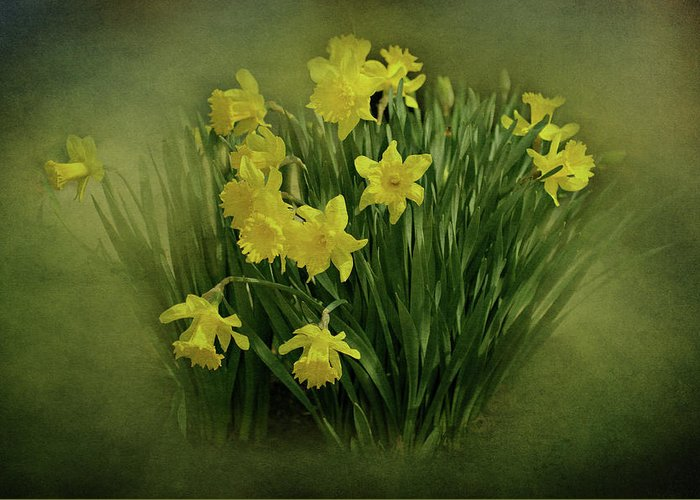 Daffodils Greeting Card featuring the photograph Daffodils by Sandy Keeton