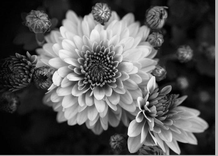 Dahlia Flower Greeting Card featuring the photograph Dahlia Burst B/w by Ronda Ryan