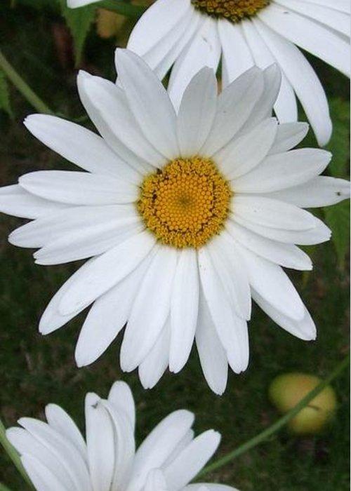 Daisy Greeting Card featuring the photograph Daisy Daisy by Deborah Brewer