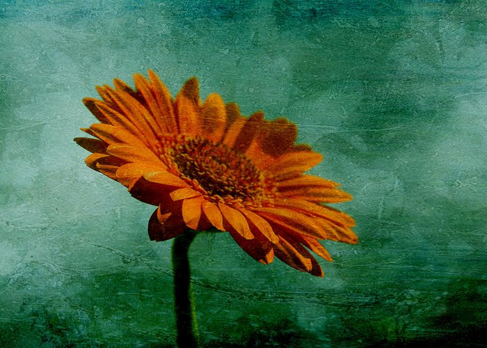 Orange Daisy Greeting Card featuring the photograph Daisy Daisy by Georgia Fowler