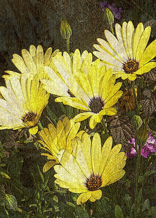 Digital Art Greeting Card featuring the digital art Daisy Daisy by Tom Romeo
