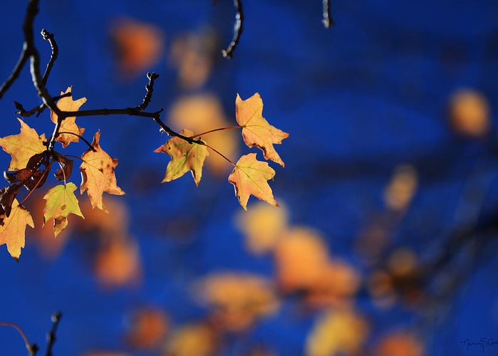Autumn Leaves Greeting Card featuring the photograph Dance by Nancy Coelho