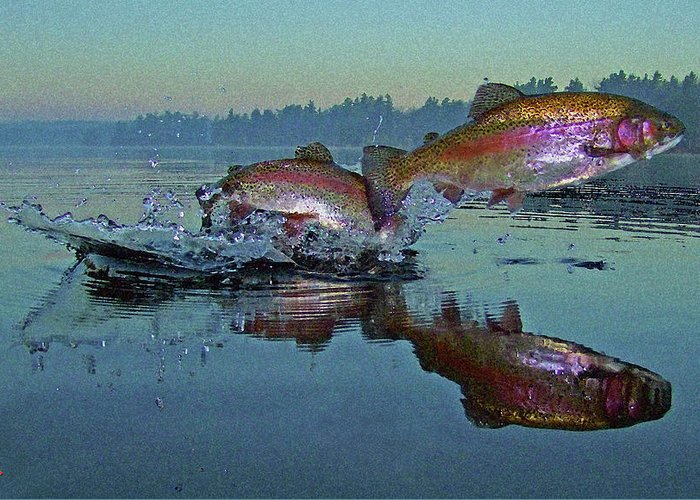 Rainbow Trout Greeting Card featuring the photograph Dance Of The Trout by Brian Pelkey