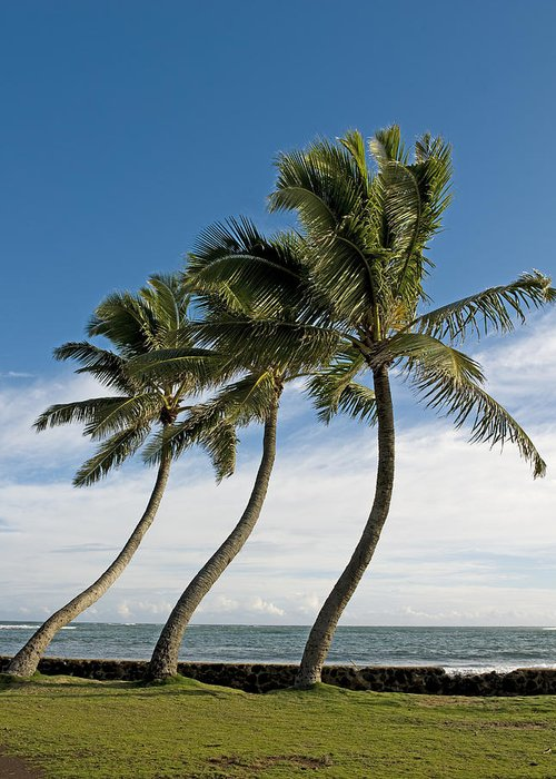 Coconut Greeting Card featuring the photograph Dancing Coconut Tree by Brendan Reals