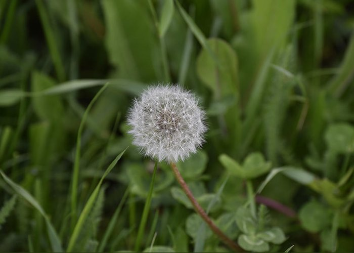 Abstract Greeting Card featuring the photograph Dandelion at the end by Adrian Bud