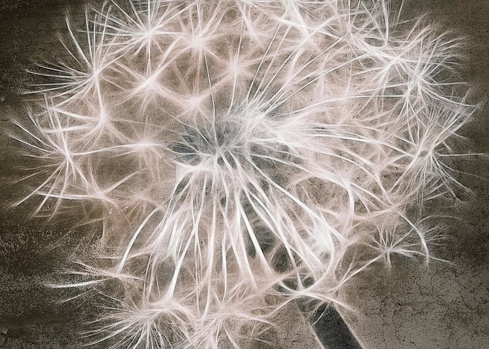 brown Prints Greeting Card featuring the digital art Dandelion In Brown by Aimelle