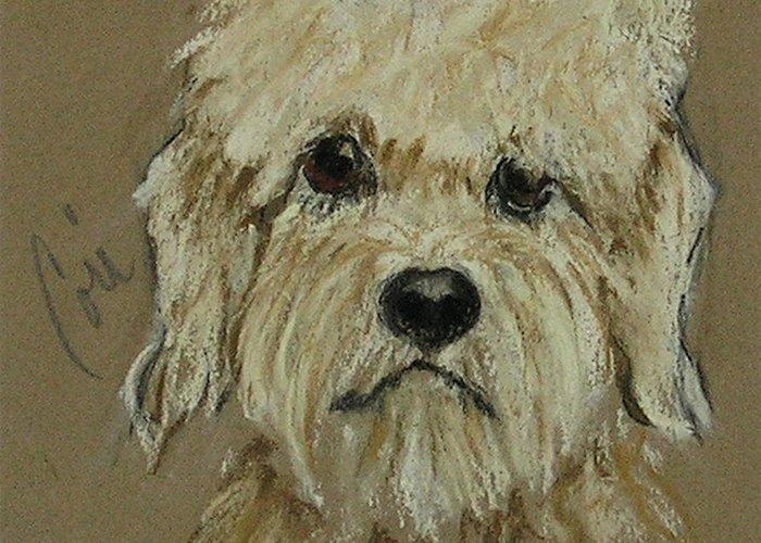 Dandie Dinmont Terrier Greeting Card featuring the drawing Dandie by Cori Solomon