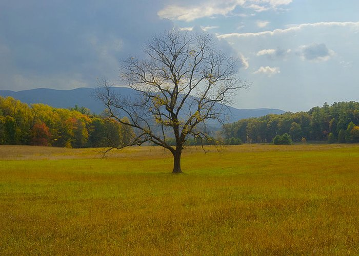 Landscape Greeting Card featuring the photograph Dare To Stand Alone by Michael Peychich