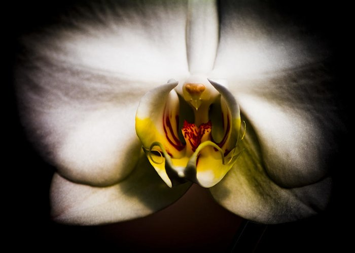 Floral Greeting Card featuring the photograph Dark Orchid One by John Ater