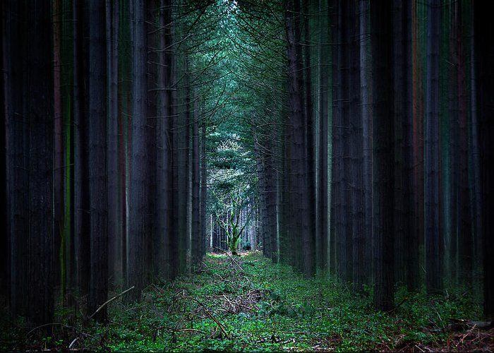Forest Greeting Card featuring the photograph Dark Side Of Forest by Svetlana Sewell