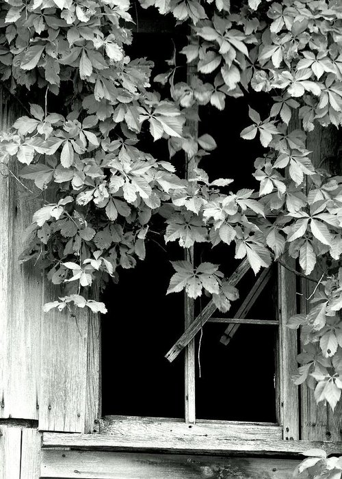 Window Greeting Card featuring the photograph Dark Within by Wild Thing