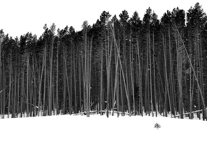 Forest Greeting Card featuring the photograph Dark Woods by Marie Leslie