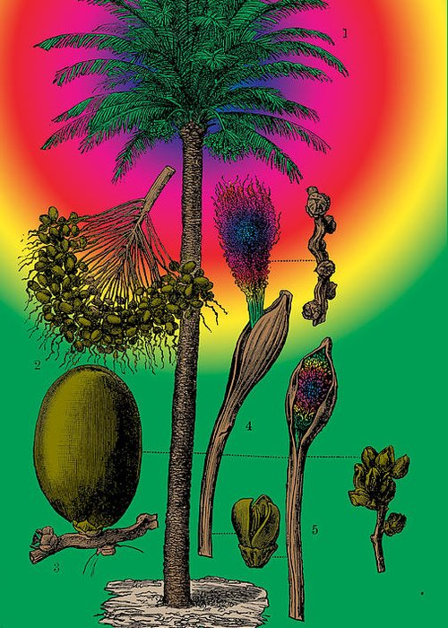 Date Palm Greeting Card featuring the digital art Date Palm by Eric Edelman