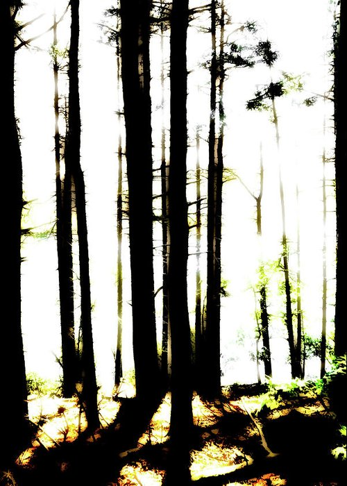 Bright Greeting Card featuring the photograph Dawn in the woods by Corey O'Hara