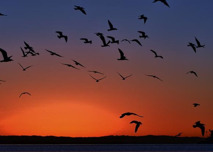 Birds Greeting Card featuring the photograph Dawns Action by John R Williams