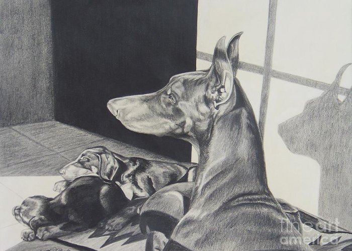 Doberman Greeting Card featuring the drawing Day Dreams by Cynthia Riley