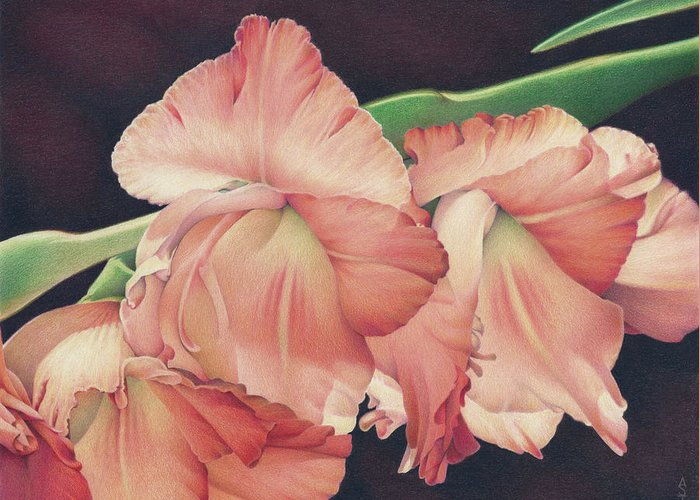 Gladiolas Greeting Card featuring the drawing Daylights Last Dance by Amy S Turner