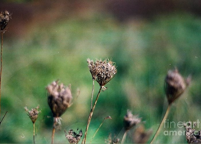Fall Greeting Card featuring the photograph Dead Flower by Simonne Mina