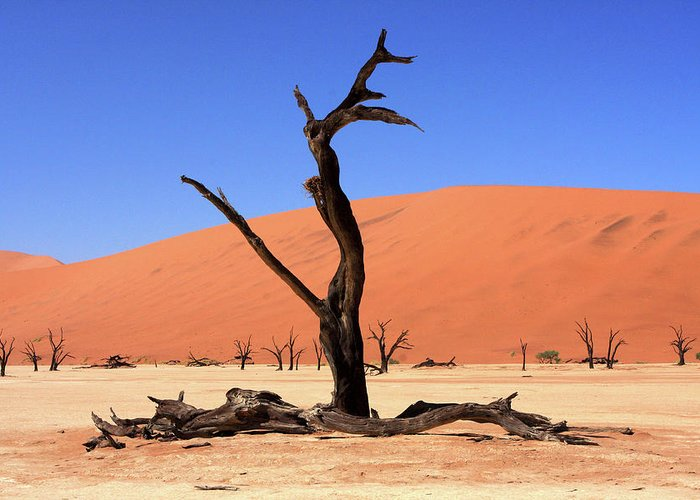 Africa Greeting Card featuring the photograph Dead Vlei Tree by Aidan Moran