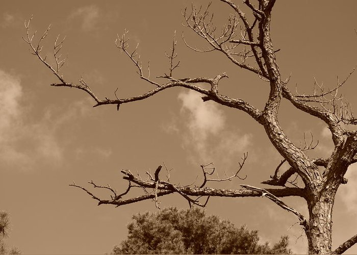 Sepia Greeting Card featuring the photograph Dead Wood by Rob Hans