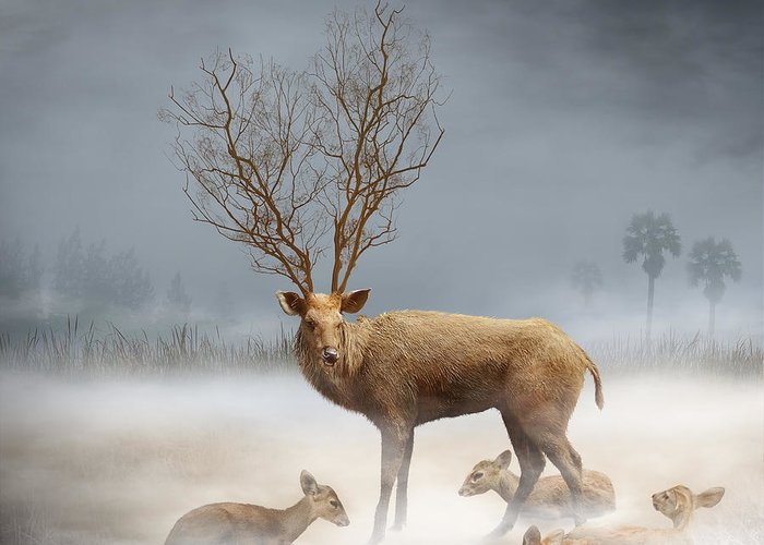 Wildlife Greeting Card featuring the photograph Deer Cool Tone by Somchai Chitprathak