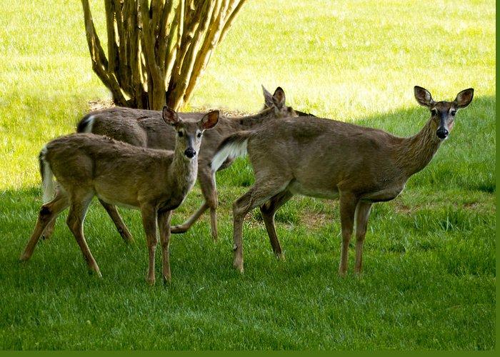 Deer Greeting Card featuring the photograph Dear Run by Bob Mullins