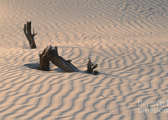 Death Valley Greeting Card featuring the photograph Death Valley Morning by Sandra Bronstein
