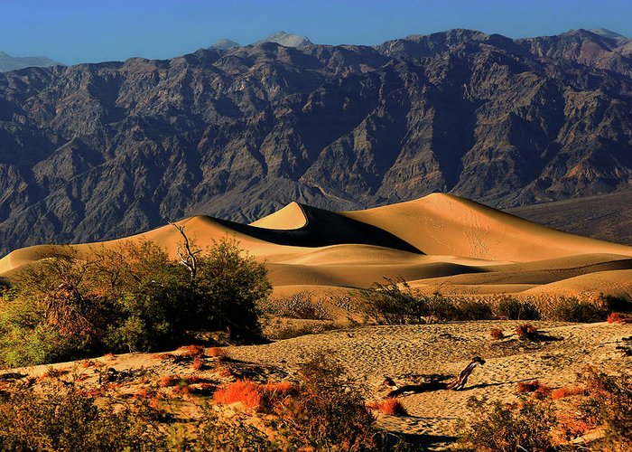Death Valley National Park Greeting Card featuring the photograph Death Valley's Mesquite Flat Sand Dunes by Christine Till