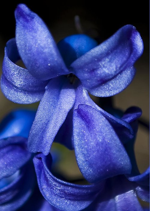Blue Greeting Card featuring the photograph Deep Blue Flower by Svetlana Sewell