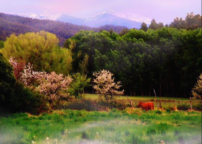 Mountains Greeting Card featuring the photograph Deep Breath Of Spring El Valle New Mexico by Anastasia Savage Ealy
