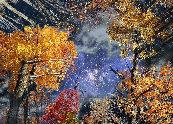 Deep Space Greeting Card featuring the photograph Deep Canopy by Dave Martsolf