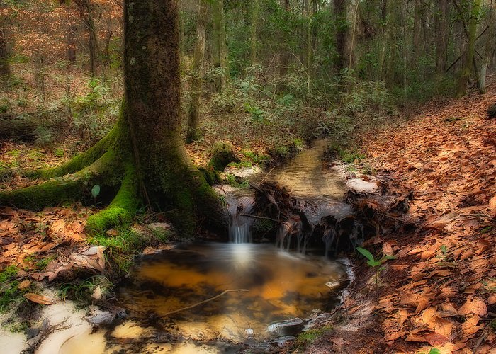 Forest Greeting Card featuring the photograph Deep Forest Creek by Rich Leighton