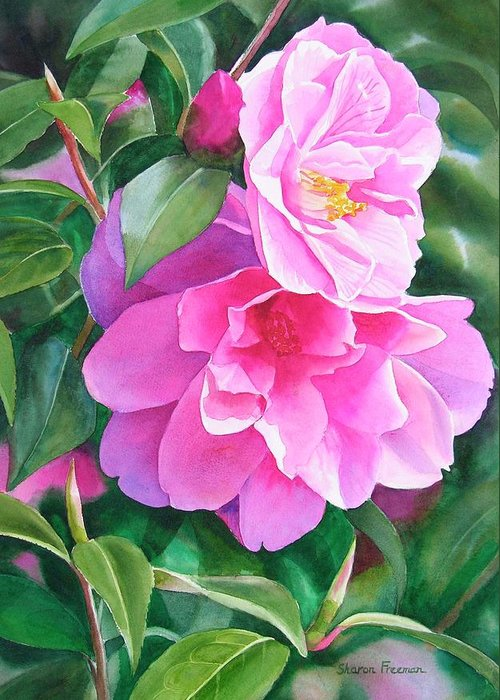 Pink Flower Greeting Card featuring the painting Deep Pink Camellias by Sharon Freeman