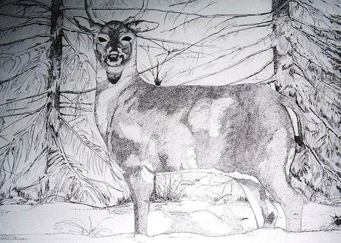 Whitetail Greeting Card featuring the drawing Deep Snow by Debra Sandstrom
