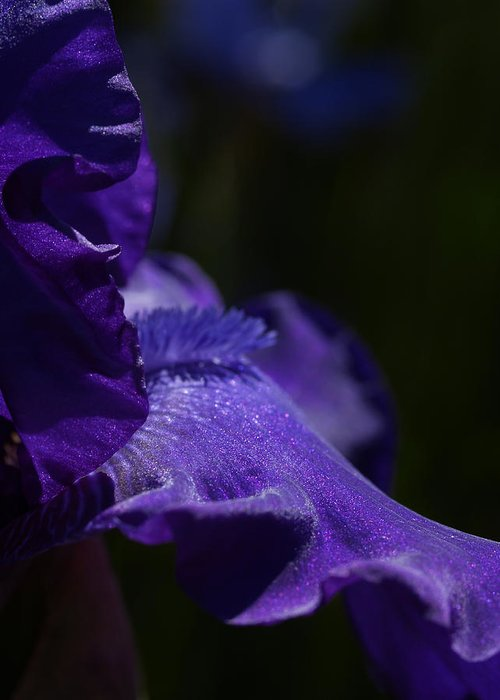 Macrophotography Greeting Card featuring the photograph Deep Sparkling Iris by Joyce Hutchinson