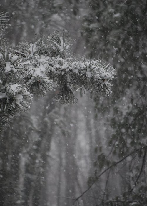 Nature Greeting Card featuring the photograph Deep Woods Snow by Peter McIntosh