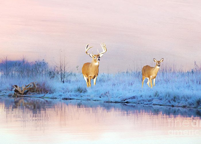 Deer Greeting Card featuring the photograph Deer At Winter Pond by Laura D Young