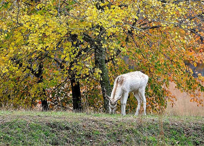 Animals Greeting Card featuring the photograph Deer Boy by Jan Amiss Photography
