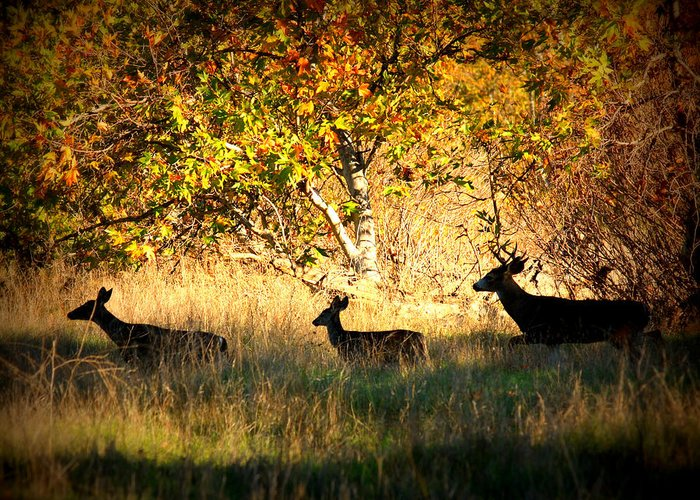 Landscape Greeting Card featuring the photograph Deer Family In Sycamore Park by Carol Groenen
