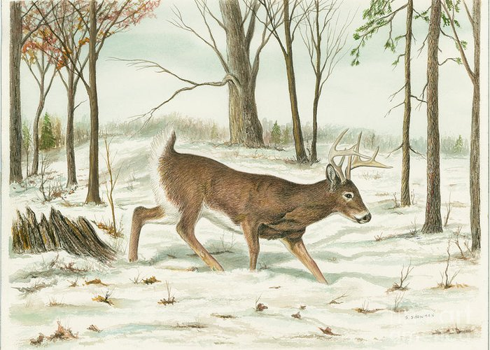 Deer Greeting Card featuring the painting Deer In Snow by Samuel Showman