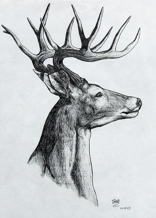 Michael Greeting Card featuring the drawing Deer by Michael TMAD Finney