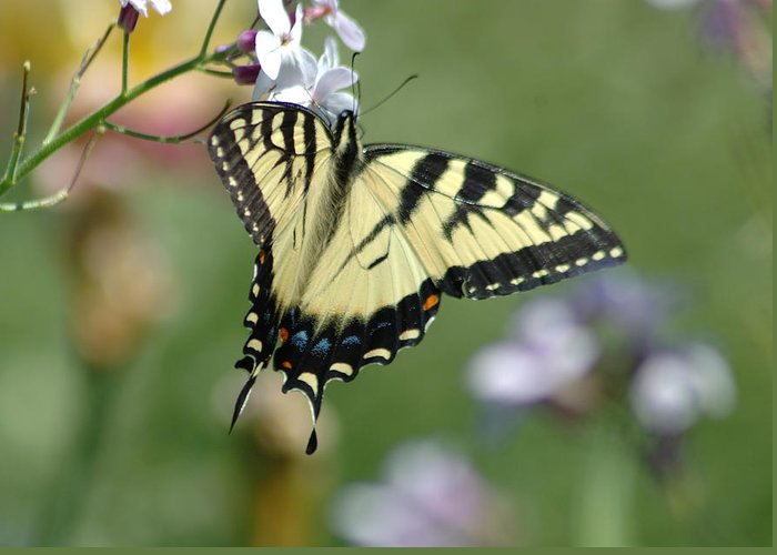 Butterfly Greeting Card featuring the photograph Delicate Balance by Linda Murphy