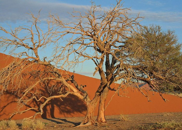 Sanddune Greeting Card featuring the photograph Desert Beauty by Joe Burns