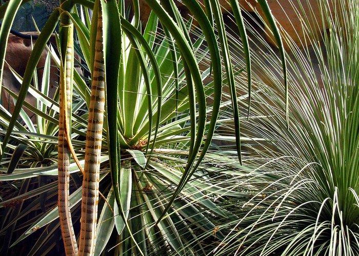 Desert Greeting Card featuring the photograph Desert Botanical by Mindy Newman