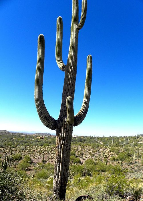Photograph On Paper Greeting Card featuring the photograph Desert Cactus 3 by Patricia Bigelow